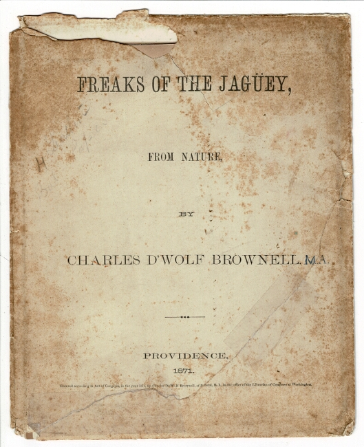 Freaks of the Jagüey, from nature [envelope title]. Charles D'Wolf Brownell.