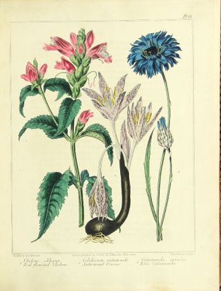 The new flora Britannica, illustrated with one hundred thirty-three plates, engraved by Sansom, from the original pictures, and coloured with the greatest exactness from drawings by Sydenham Edwards