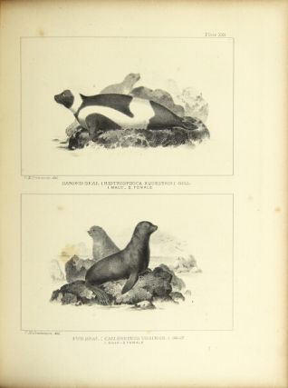 The marine mammals of the north-western coast of North America, described and illustrated: together with an account of the American whale-fishery