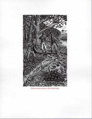 Complete wood engravings for the foresters: large-paper proofs suitable for framing